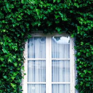 window covered in ivy